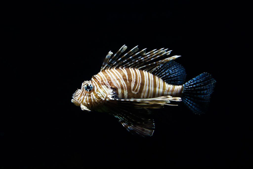 L is for lionfish and lobster